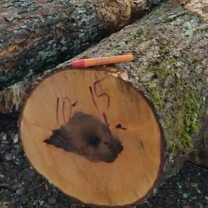 BOL Wood uses NuMark Marker on fresh cut logs